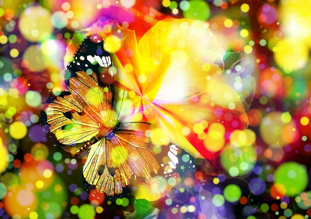 """butterfly"" Quelle: www.pixabay.com"