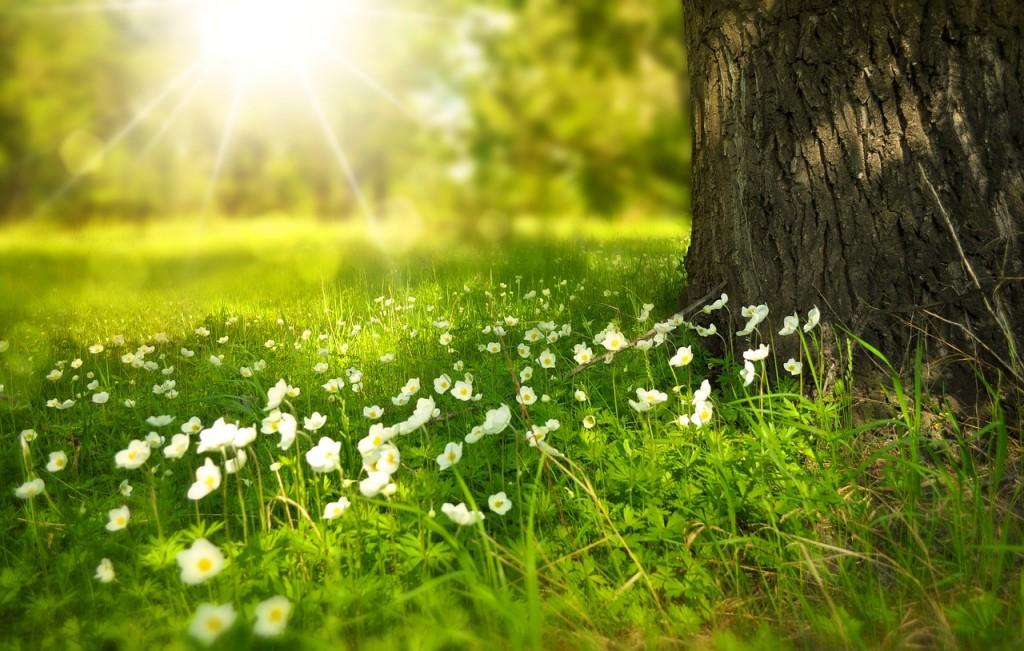 """""""Spring""""; Quelle: www.pixabay.com"""