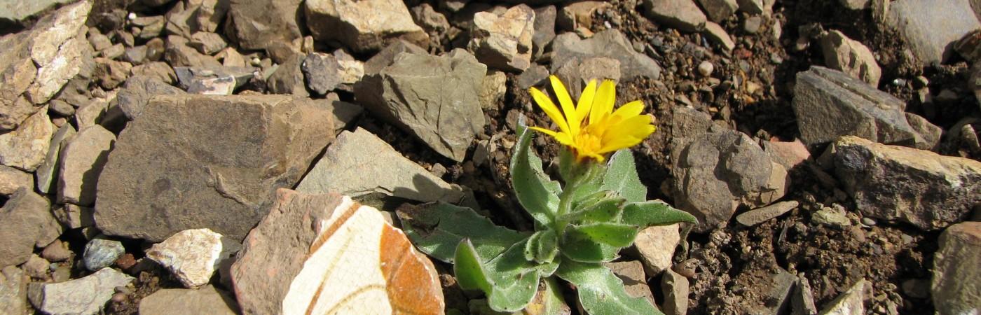 """Yvette: """"Frühling""""; Quelle: eigene; Copyright"""